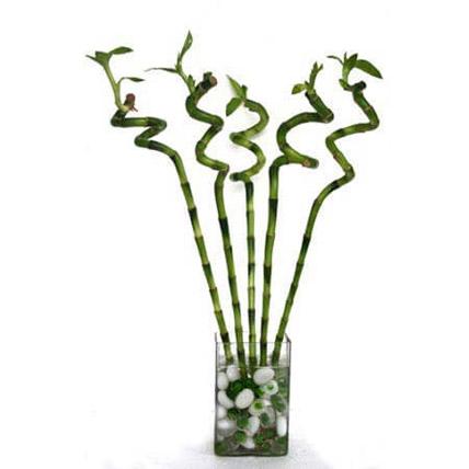 Spiral Bamboo: