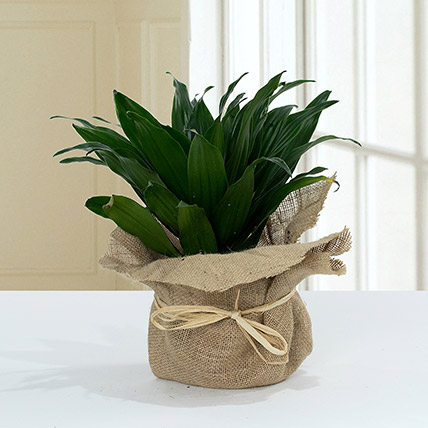 Green Elegance in Jute Wrapping Pot: Home Decor Items