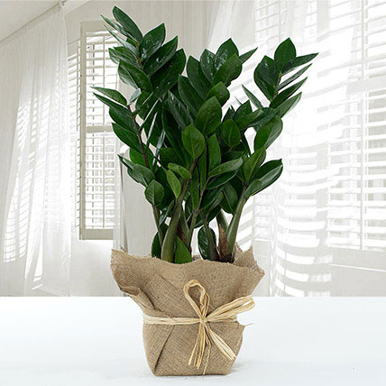 Jute Wrapped Zamia Potted Plant: Home Decor Items