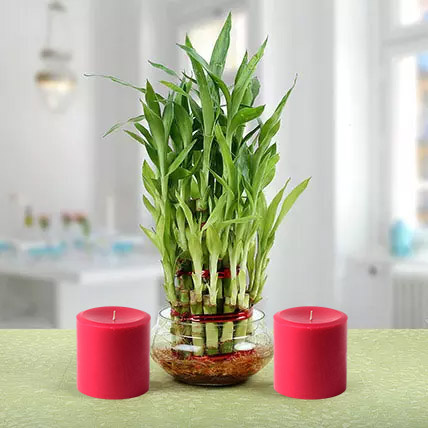 Three Layer Lucky Bamboo Plant N Candles: Home Decor Items