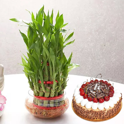 3 Layer Bamboo With Black Forest Cake: Plants