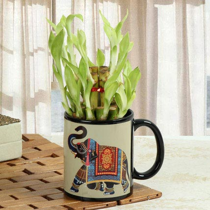 Lucky Bamboo In Printed Mug: Personalised Gifts for Sister