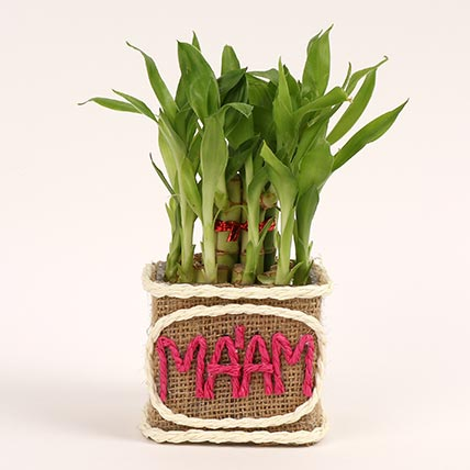 Two Layer Lucky Bamboo For Teacher: Gifts For Teacher's Day