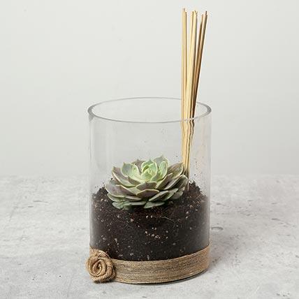 Green Echeveria in Clear Glass: Outdoor Plants in Dubai