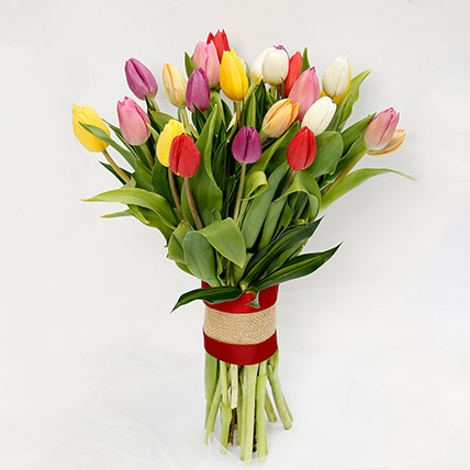 25 Vibrant Tulips Bunch: Tulip Flowers