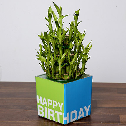 3 Layer Bamboo Plant For Birthday: Birthday Gift for Husband