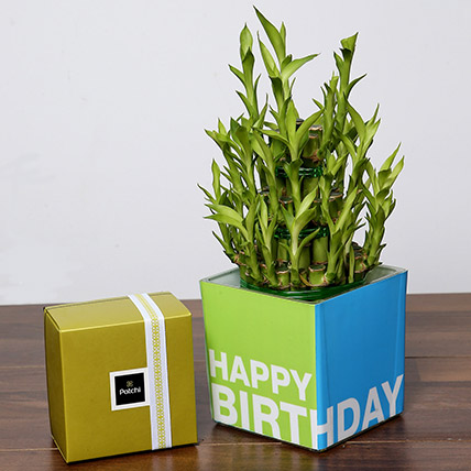 3 Layer Bamboo Plant and Patchi Chocolates For Birthday: Patchi Chocolate Dubai