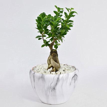 Bonsai Plant In Green Pot: Plants in Dubai