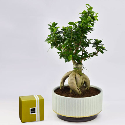 Bonsai Plant In Green Pot and Patchi Chocolates: Indoor Bonsai Tree
