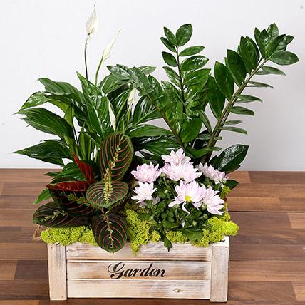 Beautiful Green Garden Box: