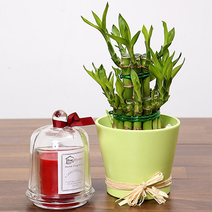 2 Layer Lucky Bamboo and Aroma Candle: Lucky Bamboo