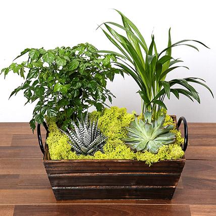 Mini Green Garden: