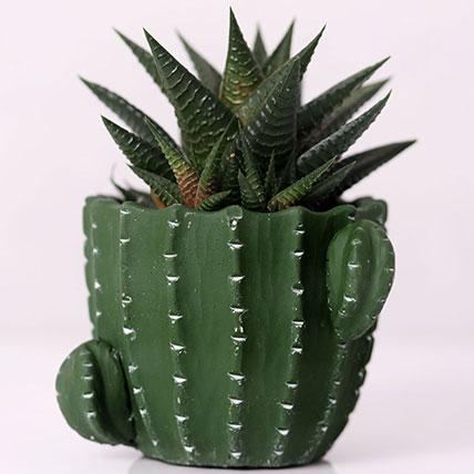 Gaster Haworthia in Cactus Design Pot: