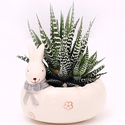 Haworthia Plant In Rabbit Design Pot: