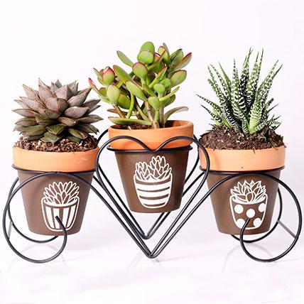 Set of 3 Plants in Triplet Pot Base: Indoor Plants in Dubai