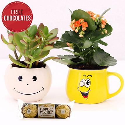Crassula and Kalanchoe with Free Ferrero Rocher: