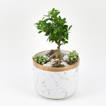 Bonsai & Fittonia Plant In Platter Planter: Plants for Birthday Gift