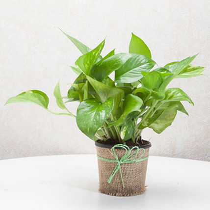 Money Plant PH: Gift Delivery Philippines