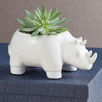 Safari Rhino Succulents: Plants For USA