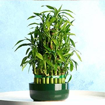 Plants Dubai