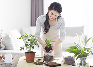 How to take care of Plants?