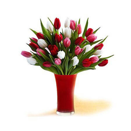 30 Red White Pink Tulips In A Glass