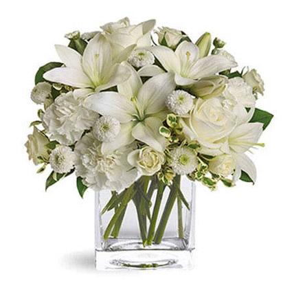 Stunning White Beauty