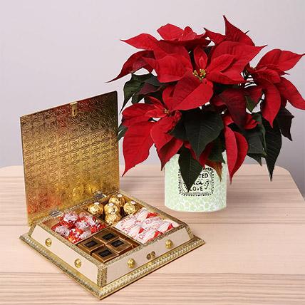 Scrumptious Chocolates and Poinsettia Plant Combo