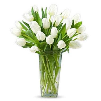 20 White Tulips QT