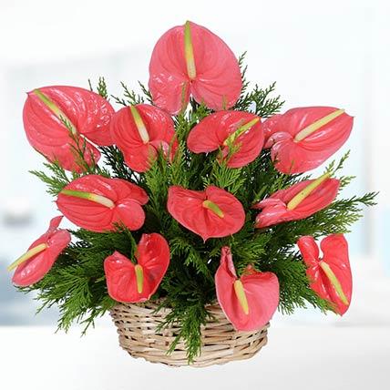 Tropical Anthurium Basket