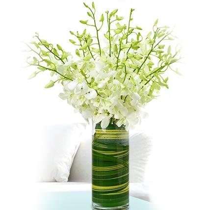 30 Stems White Dendrobium Orchids Vase
