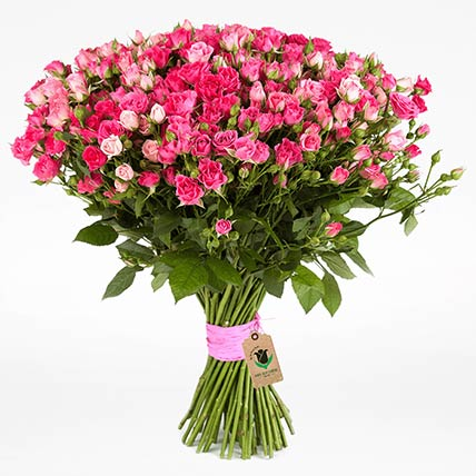50 Stems Dark Pink Spray Roses Bunch
