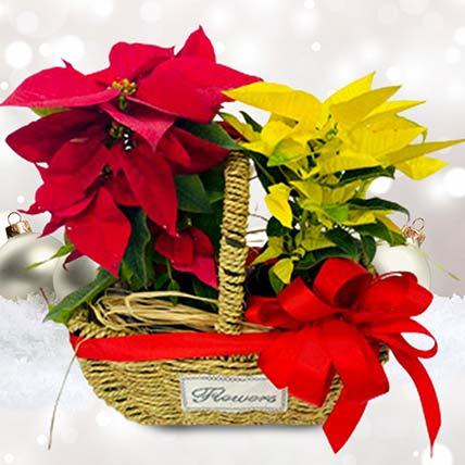 Elegant Poinsettia Plants Basket