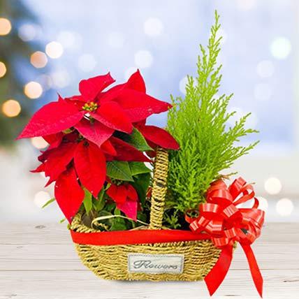 Lush Red Poinsettia & Cupressus Plants Basket