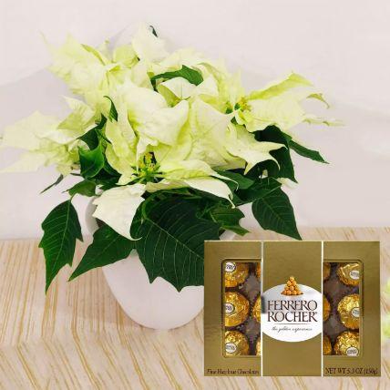 White Poinsettia Plant & Ferrero Rocher Chocolates