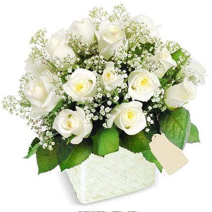 Pot Of White Roses