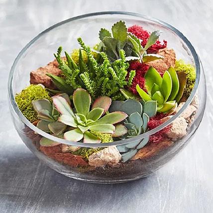 Glass Succulent Terrarium